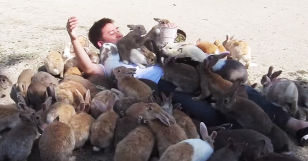 A Swarm Of 'Rabbit Island' Bunnies Attack This Guy But He Doesn't Mind